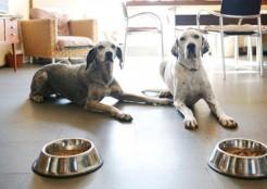 2匹の犬 ごはん  04-19-04