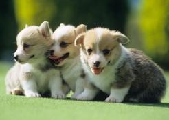 3匹の子犬  04-18-05