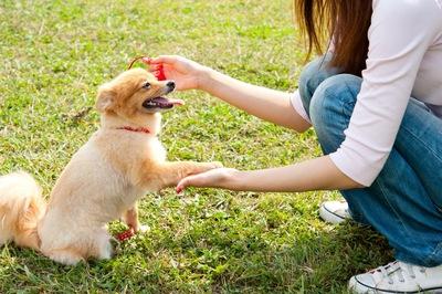 お手をする犬  04-20-04