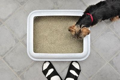 犬のトイレ  04-18-02