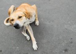 犬の歩き方 04-24-05