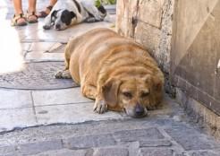 肥満の犬  04-24-04