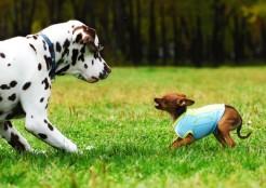 他の犬にほえる