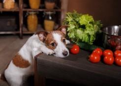 犬とキッチン 04-24-06
