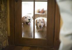 留守番する2匹の犬 04-20-12