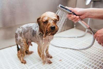 犬 シャワー 04-24-02