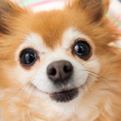 犬の顔 04-26-04