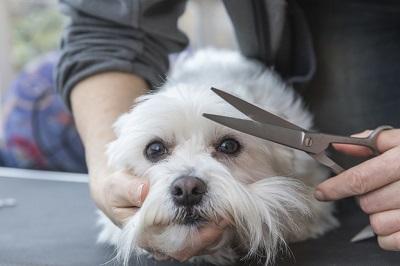 犬のヘアカット 04-24-10
