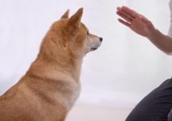 待てをする犬 12-04-02