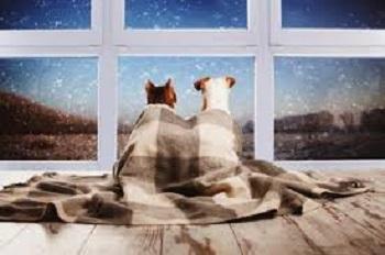 毛布にくるまる犬達 01-29-02