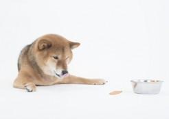 偏食する犬 11-27-01