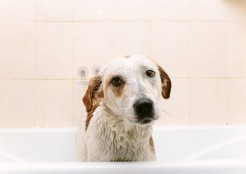 お風呂に入る犬 12-05-01