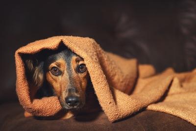 音を怖がる犬 11-20-02