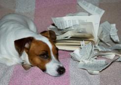 本を破る犬
