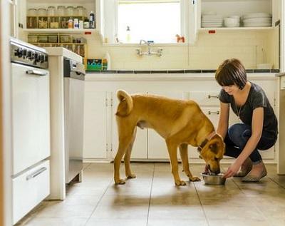 台所でえさを食べる犬 12-04-03