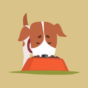 エサを食べる犬 11-29-03