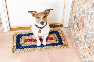 玄関で待つ犬 11-17-01