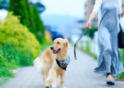 愛犬と散歩 12-06-01