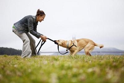 リードをかむ犬 12-06-05