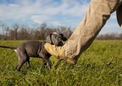 足を噛む犬 12-07-03