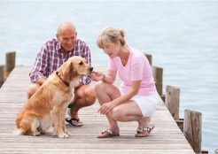 海で散歩する夫婦と犬