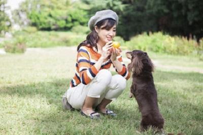 おもちゃで遊ぶ犬 11-30-01