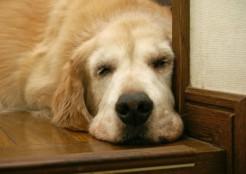 老犬 11-15-03