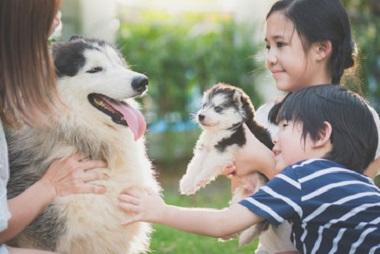 社会性を育てる犬達 11-09-06