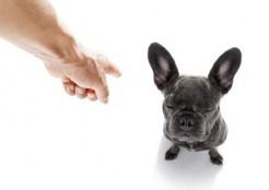 叱られる犬 11-30-07