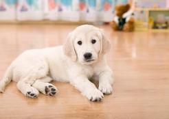 白い犬 11-08-01
