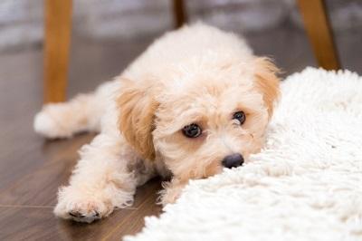 愛犬 反抗期  05-16-02