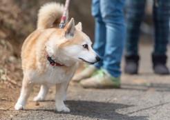 反抗期の犬 11-09-05