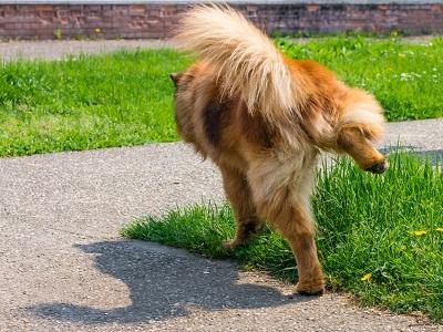 散歩途中のおしっこ 04-28-06