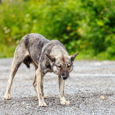 おすの犬が身構える  11-09-02