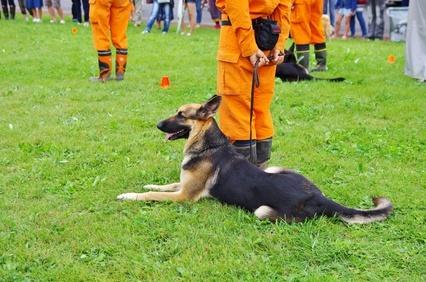 災害の訓練 11-09-07