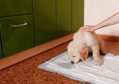 ペットシートの臭いを嗅ぐ犬  11-07-02