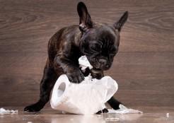 犬とトイレットペーパー 05-19-01