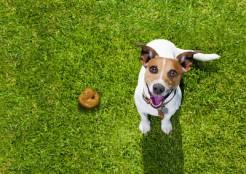 犬とウンチ  11-15-01