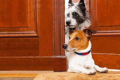 ドアからのぞく2匹