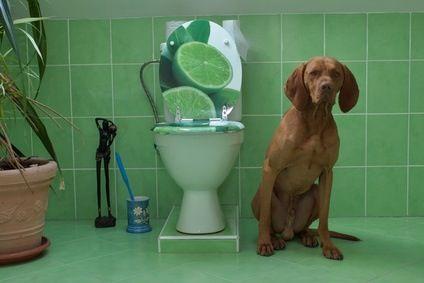 トイレと犬  04-27-10