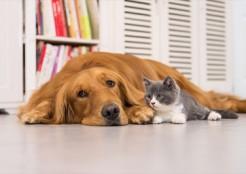 ネコと一緒の犬  04-28-03