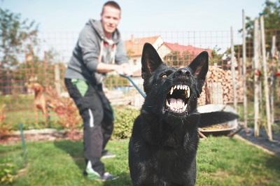 犬の反抗 04-27-05
