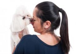 子犬 顔をなめる 04-26-05
