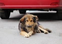 車と犬  04-26-09
