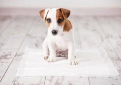犬のトイレ  04-26-09